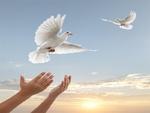 ۱۲ زندانی جرائم غیرعمد اردکان آزاد شدند