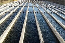 ۱۵۰ هزار تن خوراک آبزیان سالانه درچهارمحال وبختیاری تولید می شود