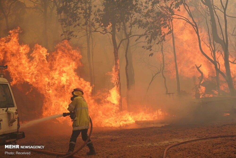 سرخی انارستان مازندران خونبهای آتش است/ حال بد میانکاله
