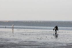 تلف شدن ۱۲ هزار و۸۰۰ بال پرنده مهاجر در تالاب میانکاله