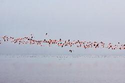 بوشهریها میزبان خوبی بودند/ افزایش جمعیت پرندگان مهاجر