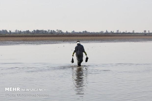 تلفات پرندگان مهاجر در میانکاله از ۲۰ هزار بال گذشت
