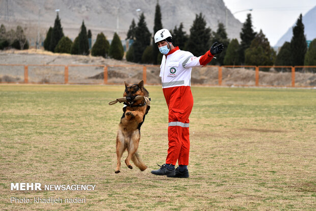Red Crescent rescue dogs' drill in Isfahan