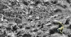 مستندسازی از حضور نخستین پلنگ در منطقه سرو کشمر بردسکن