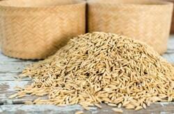 استفاده از بذر گواهی شده در افزایش عملکرد محصول برنج موثر است