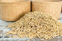 شرکت تولید بذر در کهگیلویه به علت کم فروشی محکوم شد