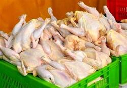 مصرف مرغ در تهران طی یک هفته ۶۰۰ تن افزایش یافت/ کاهش قیمت از هفته جاری