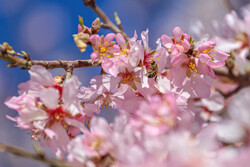 Yezd'de mevsim kış, hava bahar