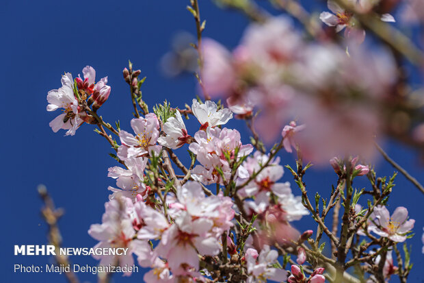 بهار در زمستان