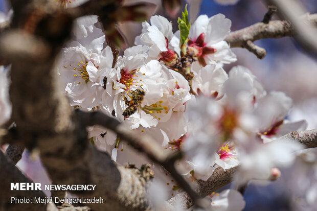Bahar