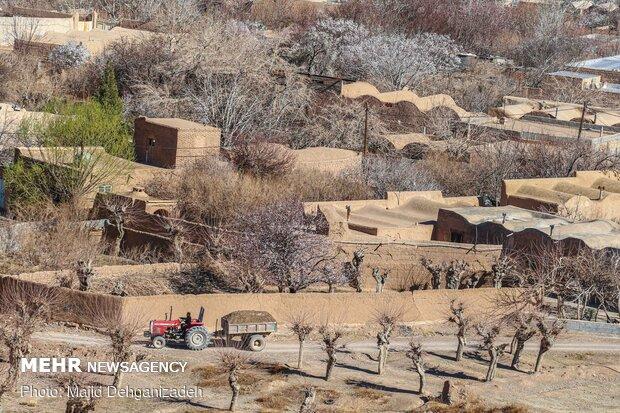 Spring arrives in Winter in Yazd