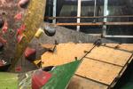 تخریب سالن سنگنوردی به خاطر اختلاف دو فدراسیون/ شیشه همسایه را شکستند!