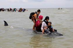 مرگ ۴۶ نهنگ در ساحل جزیره مادورای اندونزی