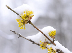 سرما در راه خراسان رضوی/ کاهش محسوس دما از آخر هفته جاری