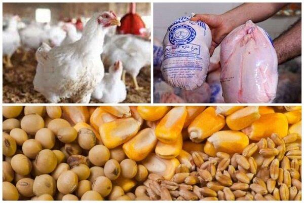 تکرار نابسامانی در بازار مرغ/ لزوم نظارت جدی بر توزیعکنندگان مرغ