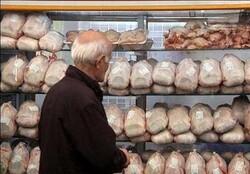 مرغ گرم در همدان روزانه توزیع میشود