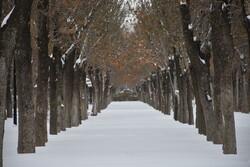 تداوم سرما در خراسان شمالی/ آخر هفته برفی در انتظار استان است