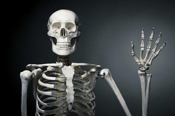 سلول عامل پوکی استخوان در بدن کشف شد
