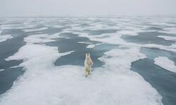 روز جهانی خرسهای سفید قطبی