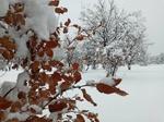 بارش شدید برف در تبریز