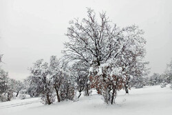 خودنمایی زمستان در روزهای پایانی سال/بارش برف وکاهش ۱۴درجه ای دما