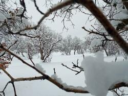 لباس سفید برف بر تن گلستان/ زمستان در واپسین روزها مردم را غافلگیر کرد