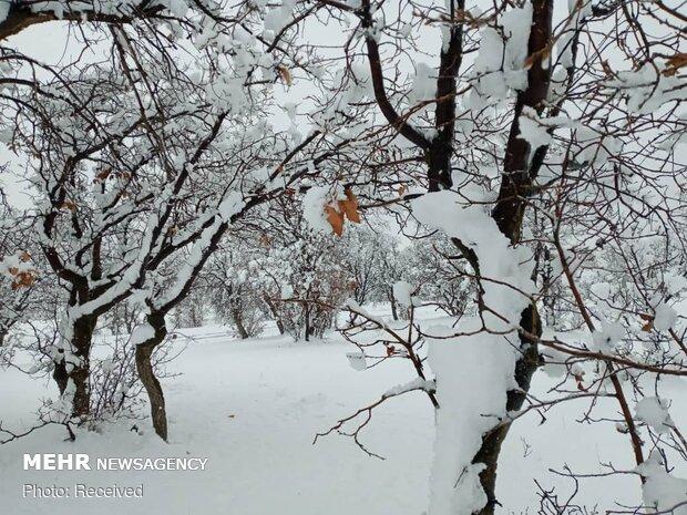 بارش برف در دهدز خوزستان