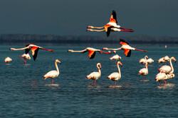 لزوم ساخت موزه برای معرفی گونه های مختلف پرندگان در ایران