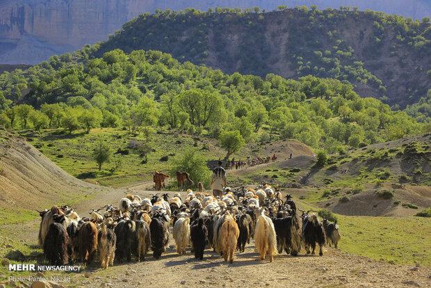 عشایر با خشکسالی سختی مواجهند/دولت یارانه کوچ ماشینی راپرداخت کند