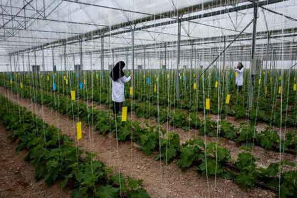 پروژه های عمرانی حوزه کشاورزی کردستان رصد میدانی می شود
