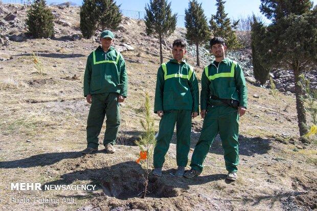 مراسم درختکاری خبرنگاران در باغات کن