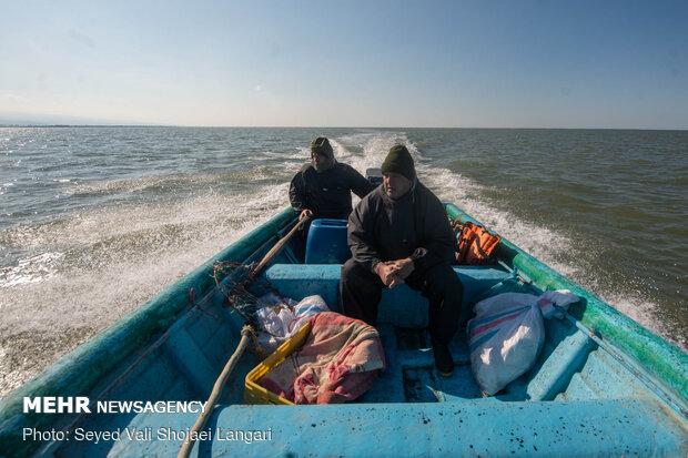 پایان مهاجرت پرندگان به میانکاله - مازندران