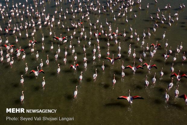 تلف شدن ۳۷ هزار بال پرنده مهاجر در تالاب بین المللی میانکاله