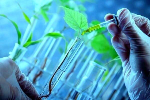 تامین امنیت غذایی با «بیوتکنولوژی سبز»