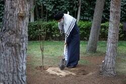 رہبر معظم انقلاب اسلامی نے شجر کاری کے دن کی مناسبت سے پھلوں کے دوپودے کاشت کئے