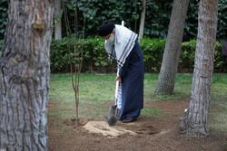 قائد الثورة الاسلامية يغرس شتلتين بمناسبة يوم الشجرة/بالصور