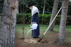 رہبر معظم انقلاب اسلامی نے پھلوں کے 2 پودے کاشت کئے