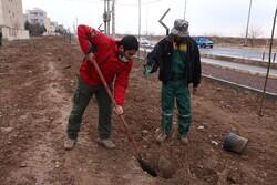 کاشت ۵۰۰ اصله نهال توسط فعالان فرهنگی استان قزوین