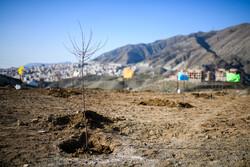 تولید یک میلیون و ۲۰۰ اصله نهال توسط زندانیان / زندانیان داوطلب برای درختکاری دستمزد دریافت میکنند