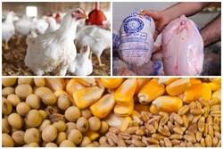 نظارت بر روند توزیع مرغ تشدید می شود/کمبود مرغ نداریم