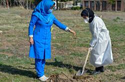 ۵۰۰ اصله نهال درخت میوه در بیمارستان فارابی کرمانشاه کاشته شد