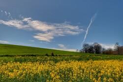 ضرورت آبیاری مزارع در گلستان/ ۱۲۰۰ تن بذر پنبه آماده توزیع است