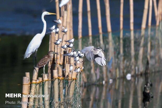 تصاویر منتخب حیات وحش هفته