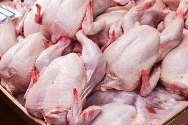روزانه فقط ۲۰۰ تن مرغ در تهران عرضه میشود/ به مردم دروغ نگوییم