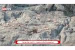 تصاویر گله کل و بز در پارک ملی دنا ثبت شد