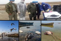 پایان تراژدی پس از ۶۰ روز/ محققان از تکرار غائله مرگ پرندگان نگرانند