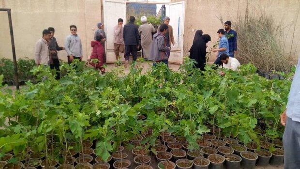 تولید نهال به میزان ۳ برابر در زنجان افزایش خواهد یافت