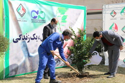 مراسم روز درختکاری در آکادمی ملی المپیک