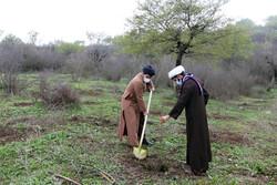 درختکاری در طبیعت هزارپیچ گرگان