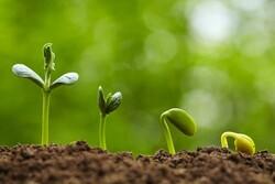 افزایش ۳.۵ درصدی مصرف سالانه هورمون های رشد گیاهی در جهان